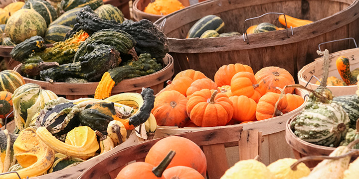 blog_images_winter_squash